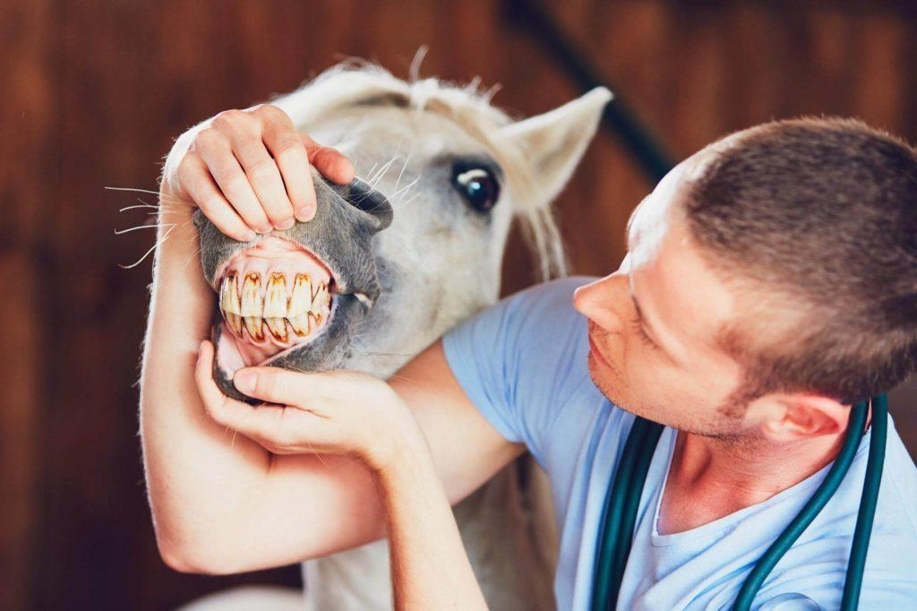 Кон с развалени зъби - Медика 3 Дент